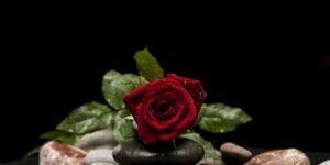 valentines-day-3945534_960_720